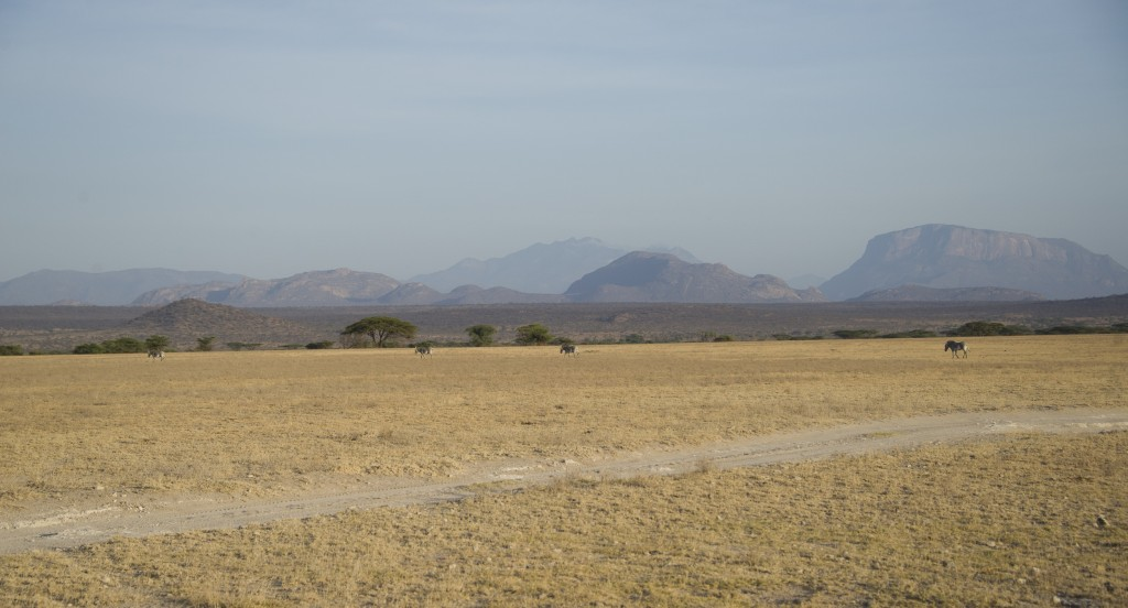 a vast yellow plain stretches to distant hills in shades of blue and grey. A thin line of zebra are crossing dwarfed by the landscape.