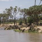 a link to the page on Samburu