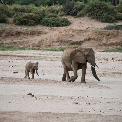tiny elephant following its mother along the dry river bed
