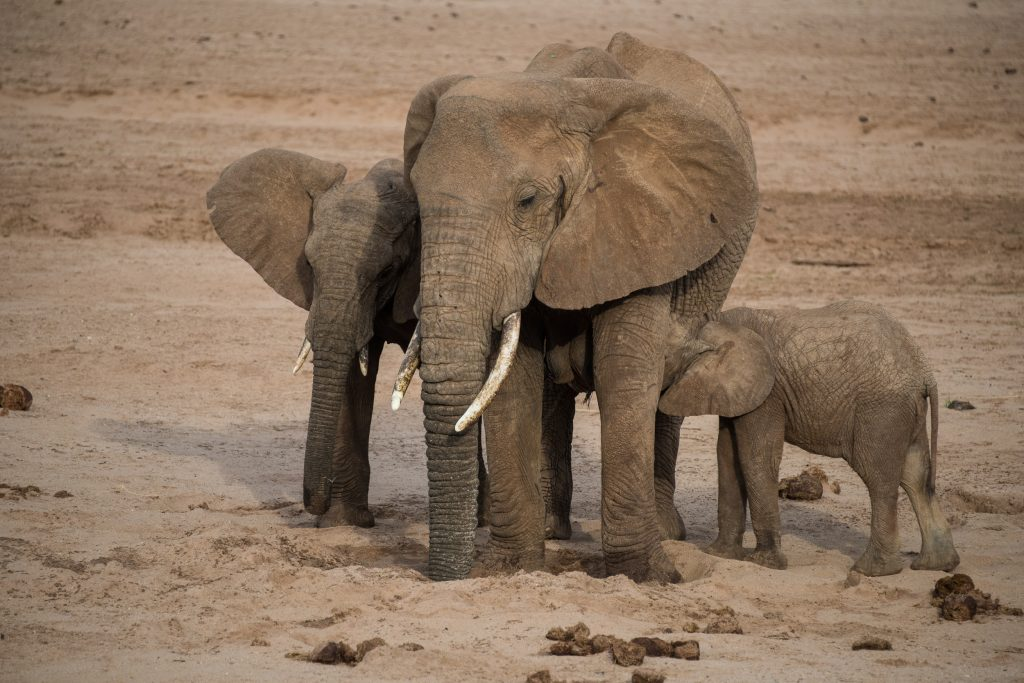 baby elephant suckling while mother is getting water from the waterhole