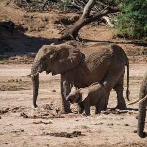 mother and baby elephant drinking at waterhole in sand