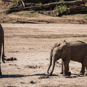 two baby elephants walking side by side