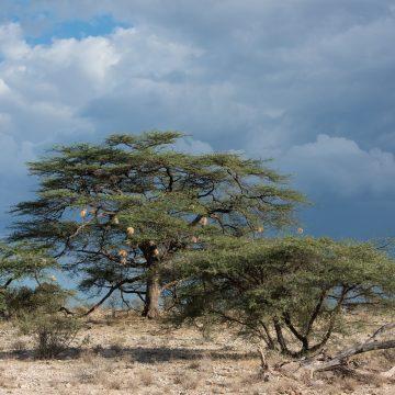 Last afternoon in Samburu